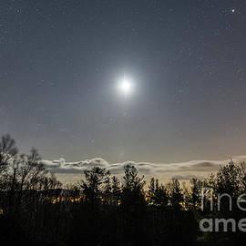 Milky Delight by Robert Loe