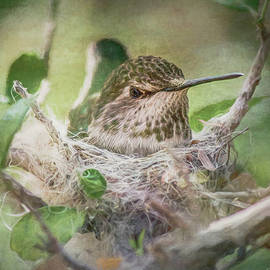 Teresa Wilson - Minding the Nest