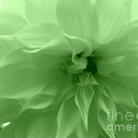 Dora Sofia Caputo Photographic Design and Fine Art - Mint Green Dahlia