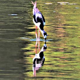 Diann Fisher - Mirror Image Stilt