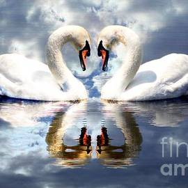 Mirrored White Swans with Clouds Effect