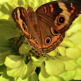 Eileen Brymer - Miss Butterfly