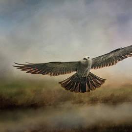 Jai Johnson - Mississippi Kite In the Marsh Raptor Art
