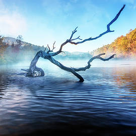 Mists of the Morning by Debra and Dave Vanderlaan