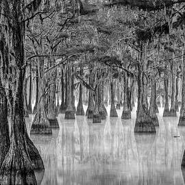 Misty Cypress Swamp  by Eric Albright