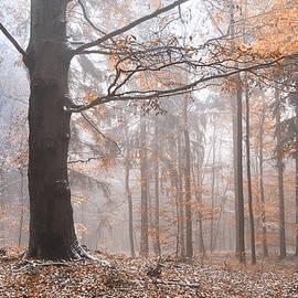 Jenny Rainbow - Misty Forest