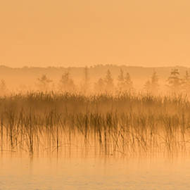 Misty Morning Floating Bog Island on Boy Lake by Patti Deters