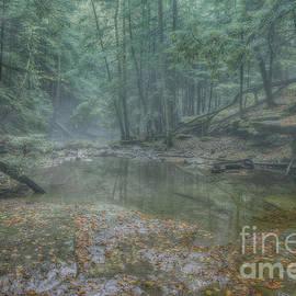 Randy Steele - Misty Morning Woodscape Five