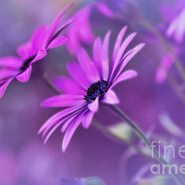 Kaye Menner - Misty Young Daisies by Kaye Menner
