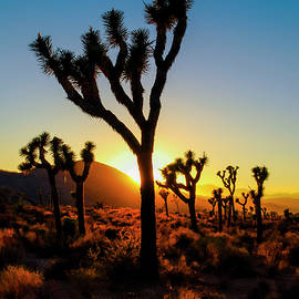 Radek Hofman - Mojave Desert