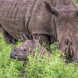 Cindi Alvarado - Mommy and Baby Rhino
