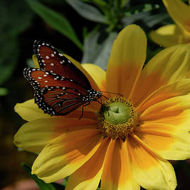 California Butterfly and Yellow Gold by Julieanne Case
