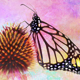 Anita Pollak - Monarch Butterfly on Coneflower Abstract