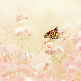 Debi Bishop - Monarch Butterfly On Milkweed