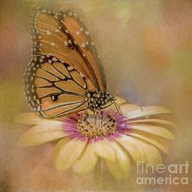Teresa Wilson - Monarch on a Daisy Mum