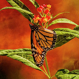 Monarch on Milkweed by Diane Schuster