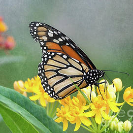 Monarch On Yellow by Ann Jacobson