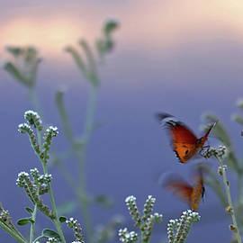 Monarchs by Eyal Bussiba