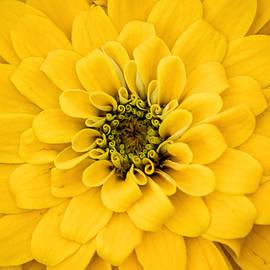 Don Johnson - Monastery Yellow Flower