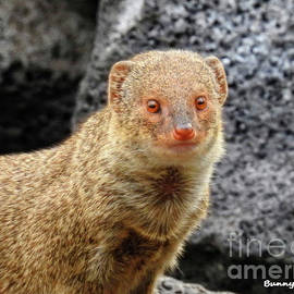 Mongoose by Bunny Clarke