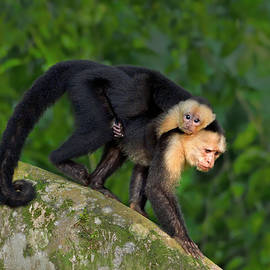 Monkey On My Back by Tony Beck