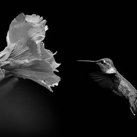 Monochrome Approach  by Michael Morse