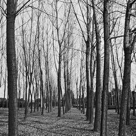 Monochrome Trees by Lee Webb
