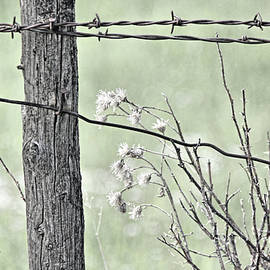 Montana Rustic Fence and Weeds Green  by Jennie Marie Schell