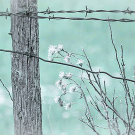 Jennie Marie Schell - Montana Rustic Fence and Weeds Teal