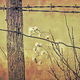 Jennie Marie Schell - Montana Rustic Fence and Wildflower Weeds