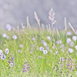 Montana Wildflowers Lavender by Jennie Marie Schell