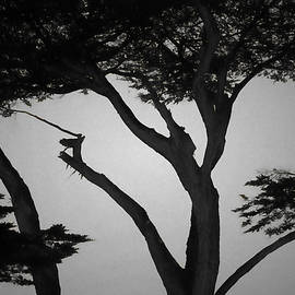 David Gordon - Monterey Cypress I BW