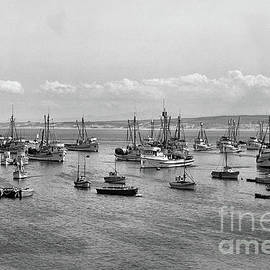 Monterey Fishing Fleet At Anchor In Monterey Harbor,  1946 by California Views Archives Mr Pat Hathaway Archives