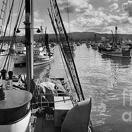 Monterey fishing fleet in Monterey Harbor 1941 by California Views Archives Mr Pat Hathaway Archives