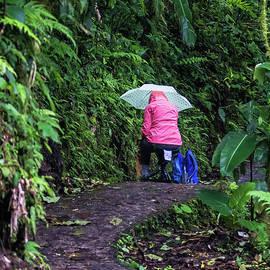 Monteverde Artist in the Rain by Norma Brandsberg