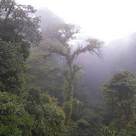 Monteverde Misty Morning by Norma Brandsberg