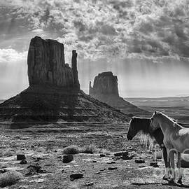 Monument Valley Horses by Priscilla Burgers