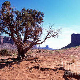 Monument Valley Tree 1 by Kim Lessel