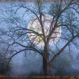 Moon in the Trees by Debra and Dave Vanderlaan