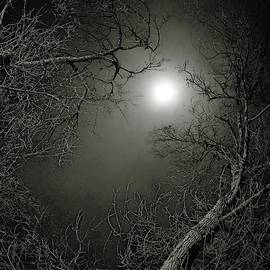 Moon Light On Lamp Lit Night by Dutch Bieber