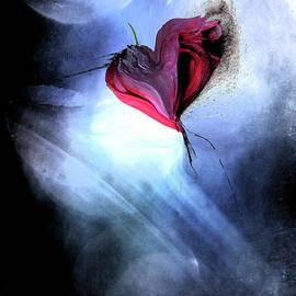 Moonlight Love by Linda Sannuti