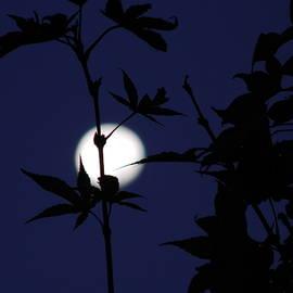 Moonlight Sonata by Arlane Crump