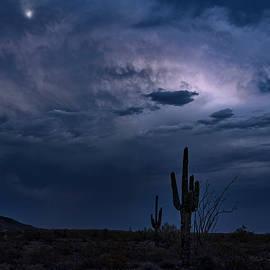 Saija Lehtonen - Moonlit Desert Night