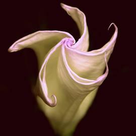 Jessica Jenney - Moonlit Moon Flower