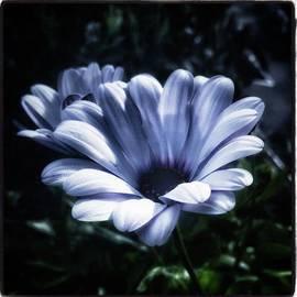 Jim James - Moonlit Petals. From The Beautiful