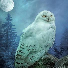 Brian Tarr - Moonlit Snowy Owl