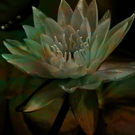 Lesa Fine - Moonlit Water Lily