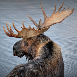 Moose Drool by Ryan Smith