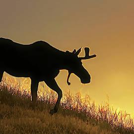 Jennie Marie Schell - Moose Evening Wander
