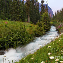 Moraine Stream Wildflower Display by Norma Brandsberg